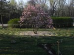Early Morning reveals a carpet of petals and the blooms still in stunning glory.