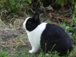 A dear and sweet bunny that added life to ours.