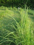 Prairie Plants - masters at harvesting moisture