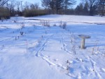 1-15-2012_DeerTracks