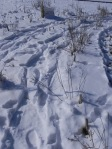 SnowshoeTracks