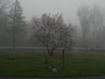 Mist surrounds Magnolia