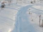 Prints in snow