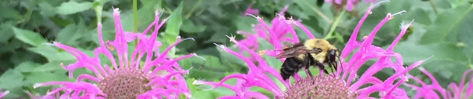 Bumble Bee in labyrinth