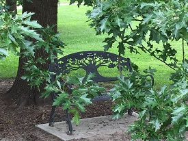 Bench With Tree